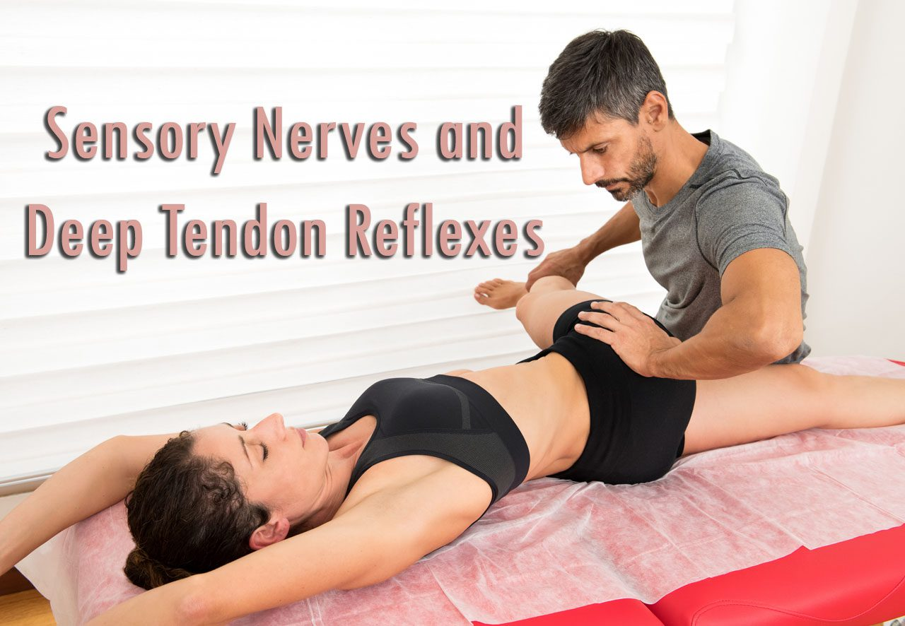 11860 Vista Del Sol, Ste. 128 Sensory Nerves and Deep Tendon Reflexes El Paso, Texas