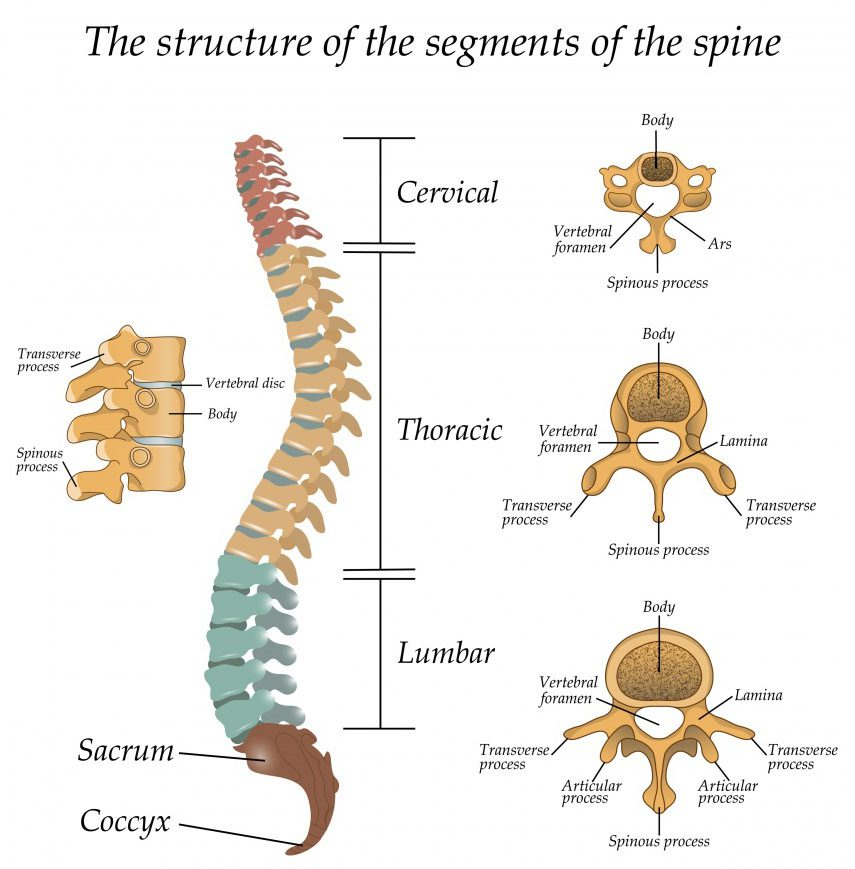 11860 Vista Del Sol, Ste. 128 Thoracic Spine - Middle Back Basics